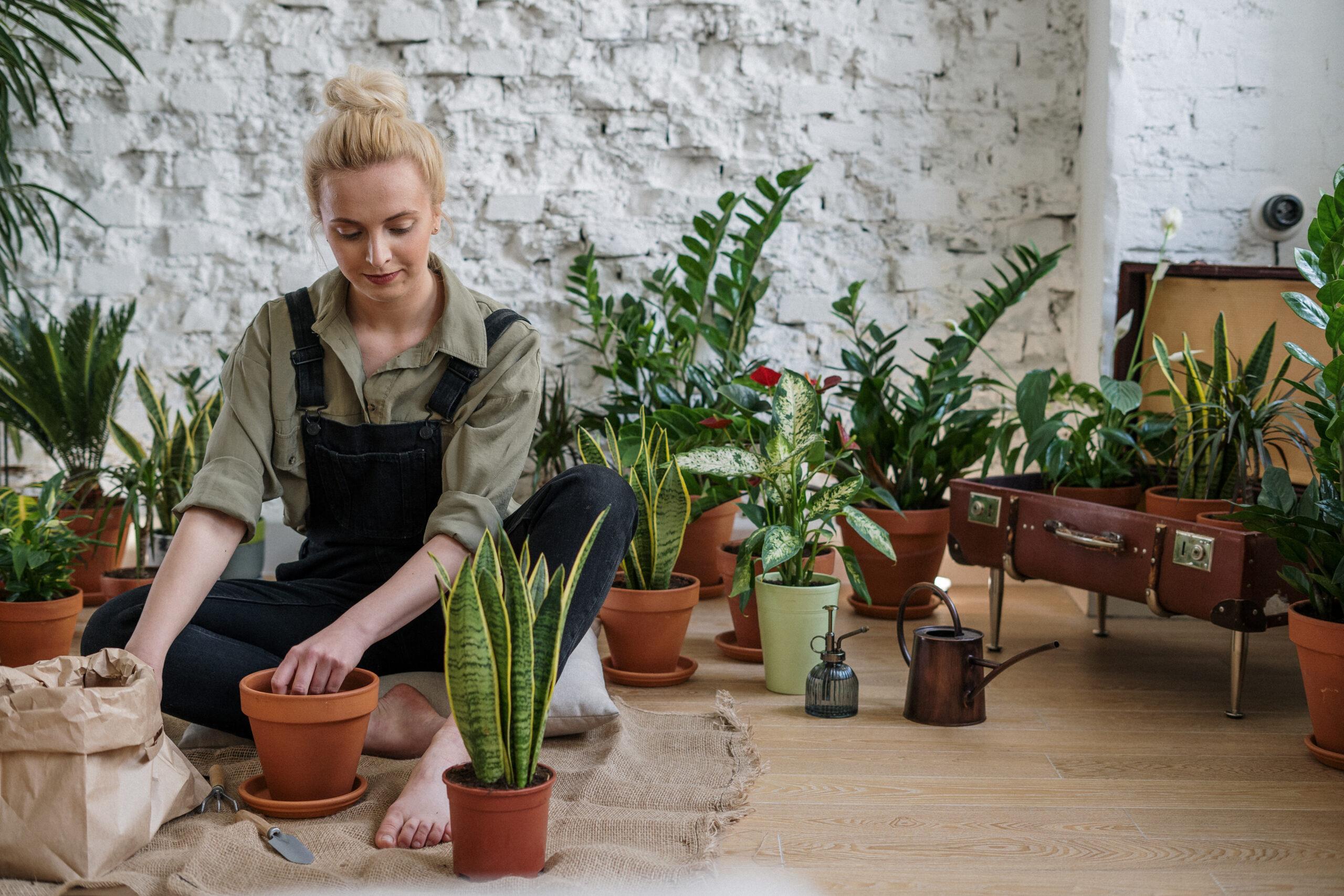 Pflege von Pflanzen
